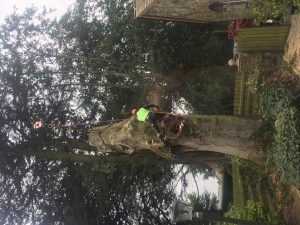 Professional tree services in Meath and Dublin
