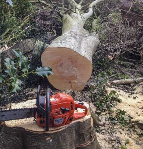 Stump Grinding in Meath and Dublin