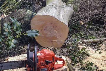 Tree Felling, Dismantling & Rigging
