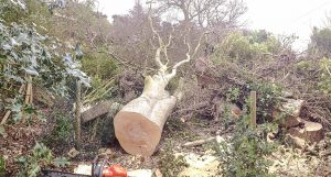 Tree Services Meath and Dublin