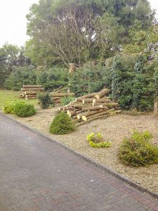 Trees and Shrubs Services Meath and Dublin
