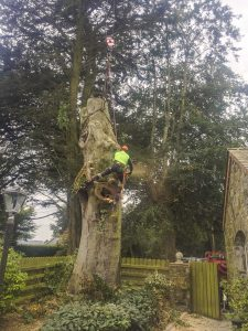 Tree Felling, Dismantling and Rigging Dublin and Meath