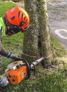 Tree Felling, Dismantling & Rigging Meath & Dublin