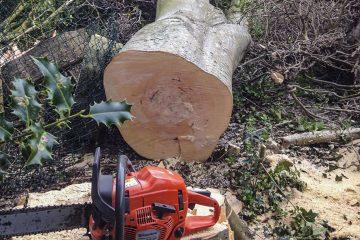 Tree Felling, Dismantling & Rigging