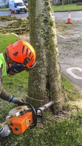 Tree Felling, Dismantling & Rigging Meath & Dublin