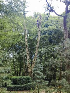 Tree Services in Meath and Dublin