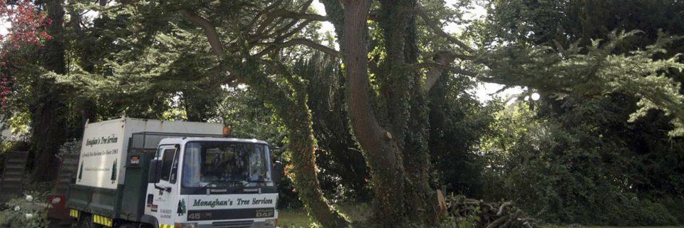 A Full-Service Tree Care Company